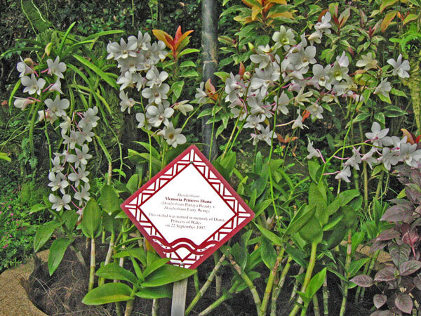 National Orchid Garden in Singapur